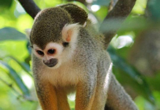 Ziplines en Monkey Jungle